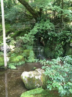 森林の写真・画像素材[20103]