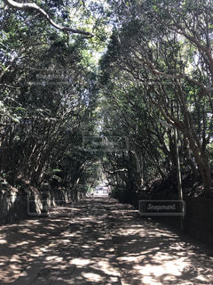 フォレスト内のツリー - No.1133069