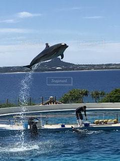 水の外に飛び出すイルカの写真・画像素材[711796]