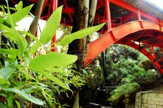 橋のアップの写真・画像素材[711729]