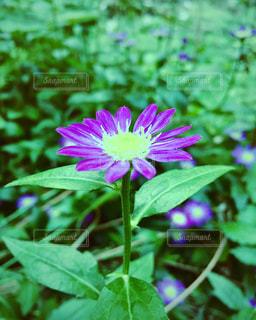 花の写真・画像素材[560502]