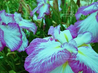 花の写真・画像素材[618557]