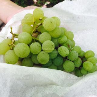 収穫した葡萄のアップの写真・画像素材[712326]
