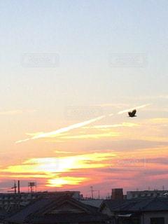 夕日と鳥の写真・画像素材[712428]