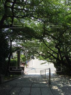 緑のトンネルの写真・画像素材[712515]