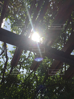 木々のすき間からこんにちはの写真・画像素材[712527]