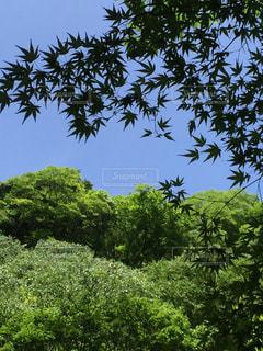 緑と空の写真・画像素材[712562]