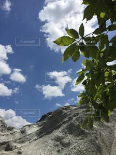 空を見上げての写真・画像素材[712567]
