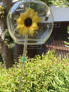夏の風鈴の写真・画像素材[712585]