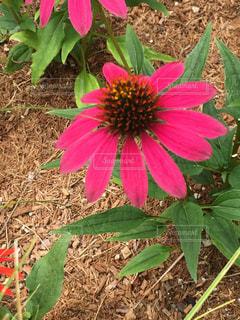 可愛い花の写真・画像素材[712593]