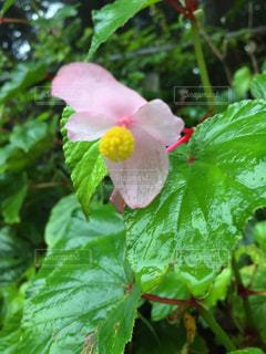 可愛い花の写真・画像素材[712657]
