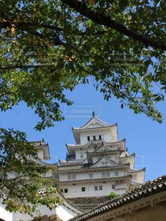 緑とお城の写真・画像素材[721414]