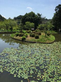 日本の庭園 - No.721448