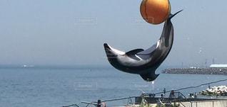 イルカの名演技の写真・画像素材[2121208]