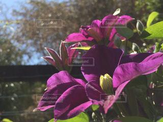 可憐な花の写真・画像素材[2155633]