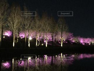ぶらり夜桜の写真・画像素材[2183744]