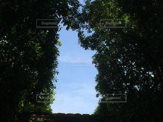 自然の中の出入口の写真・画像素材[2241334]
