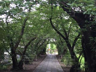 緑のトンネルの写真・画像素材[2305452]