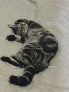 ベッドの上で横になっている猫 - No.712635