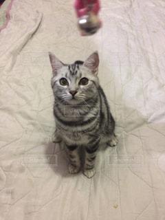 ベッドの上に座っている猫 - No.712636