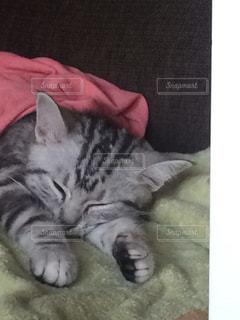 毛布の上に横になっている猫 - No.715270