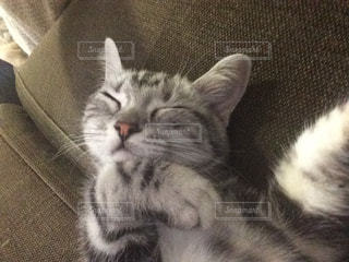 横になって、カメラを見ている猫 - No.715271