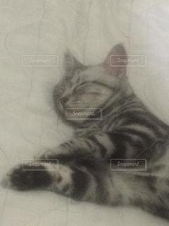 ベッドの上で横になっている猫 - No.715272