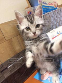 カウンターに座っている猫 - No.715438