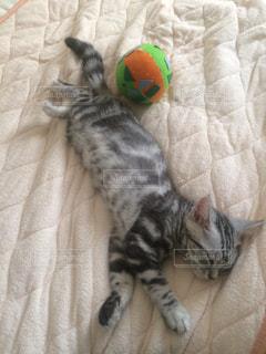 ベッドの上で横になっている猫 - No.715448