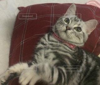 横になって、カメラを見ている猫 - No.715458