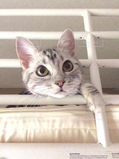 顔を出してる猫 - No.715574