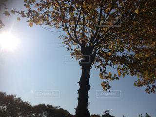 近くの木のアップ - No.715592