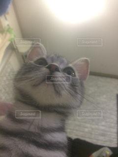 カメラを覗いて驚いてる猫 - No.718031