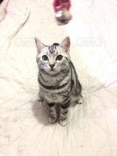 ベッドの上に座っている猫 - No.718049