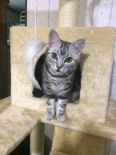 椅子に座って猫 - No.724032