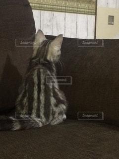 ソファに座って猫 - No.724254