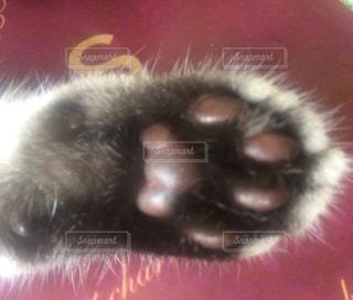 猫の肉球 - No.725261