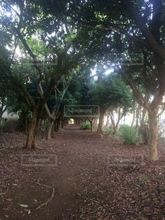 フォレスト内のツリー - No.725829