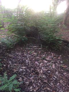 フォレスト内のツリー - No.725831