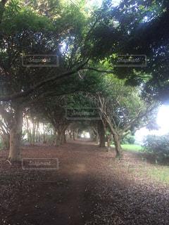 フォレスト内のツリー - No.725833
