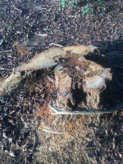 切株と木の根 - No.725835