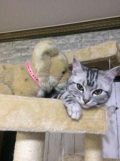 木製の表面の上に横たわる猫 - No.732214