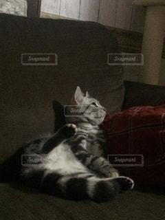 ソファで横になっている猫 - No.748663
