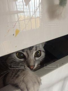 狭い所から覗いてる猫 - No.750745