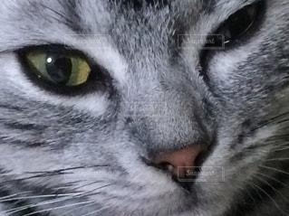 近くにカメラを見て緑の目を持つ猫のアップ - No.761508