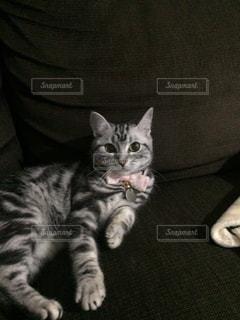猫です。 - No.833522