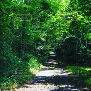 緑豊かな小道の写真・画像素材[712781]