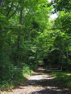 森の小道の写真・画像素材[712782]
