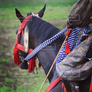 騎馬武者の写真・画像素材[713006]