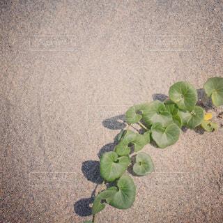 近くの花のアップの写真・画像素材[713010]